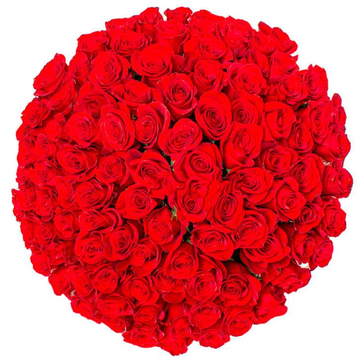 Розы Эквадор красные 101 шт